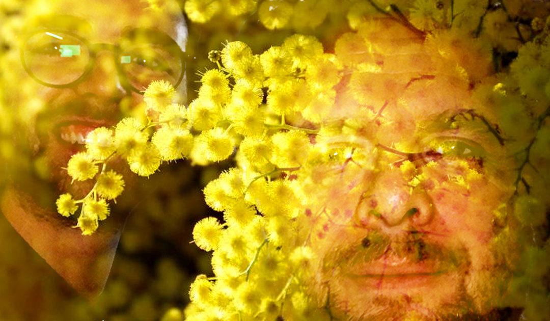 Riviera Détente #37 – Mimosa
